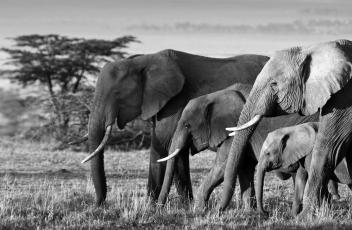 CDC: Great white hope or white elephant?